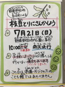 7/21えだまめ採り